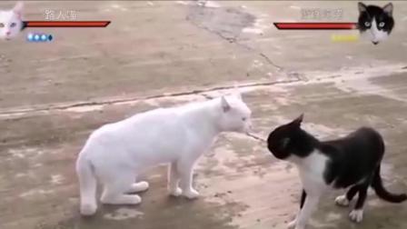 火影忍喵, 两只猫咪打架配上特效太酷了