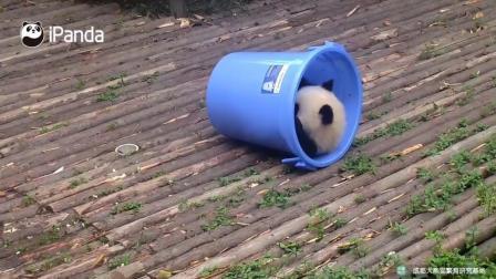 熊猫宝宝的新玩具玩的好开心啊