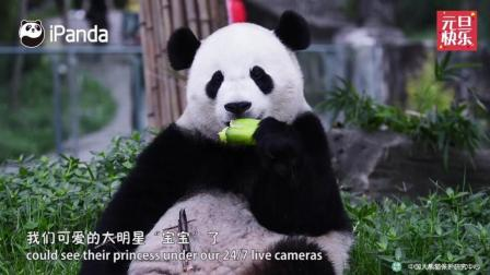 大熊猫宝宝们的2017