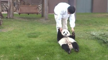 熊猫宝宝滑滑梯吃竹子太享受了