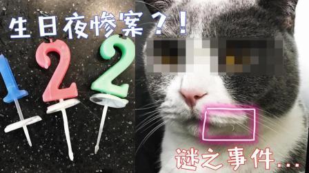 铲屎官做了蛋糕给猫咪过生日, 蠢猫太兴奋竟把小胡子烧掉了!