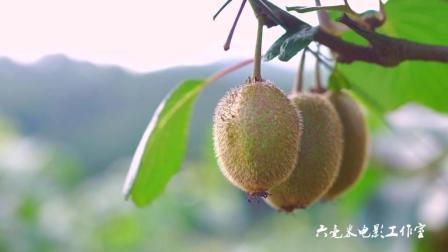 徐香猕猴桃, 营养丰富, 好吃看得见