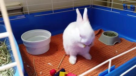 兔宝宝爱干净自己在洗脸