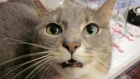 偷拍: 猫前人后的隐秘生活
