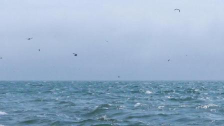 视频中一些景点青岛本地人也未必去过-枭鹰影像2017年度航拍集锦