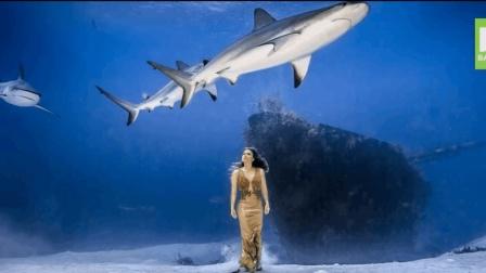 这个视频告诉你, 海底写真照背后的惊险故事——与鲨共舞, 在海底! 真不是水族馆
