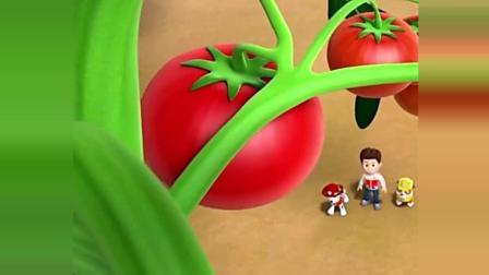 汪汪队立大功: 番茄大的像大山, 汪汪队前往救援