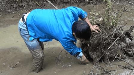 农村小伙放水抓鱼, 收获不少, 其中1条鱼120块钱一斤!
