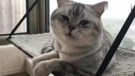 一个会说话的猫咪: 外面打雷下雨, 我好害怕, 妈妈快来陪我