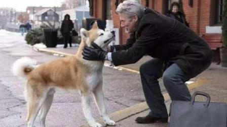 三分钟看完感人电影《忠犬八公的故事》