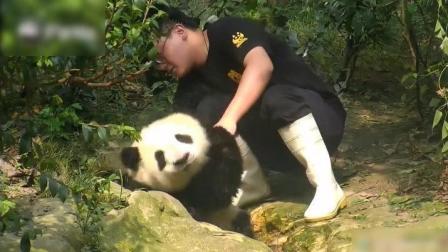 拒绝洗澡的熊猫