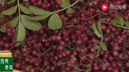 舌尖上的中国: 正宗的花椒油是怎么炼成的! 麻中有芳香味!