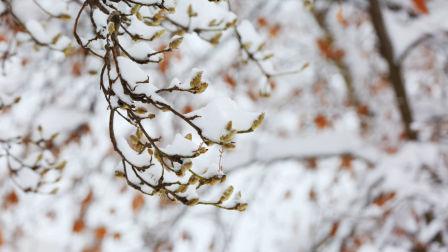 冰雪覆盖老河口,银装素裹美呆了!