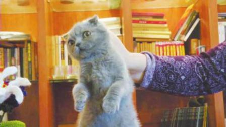 为什么一拧猫脖子后面的肉, 猫立马就一动不动? 今天可算知道了