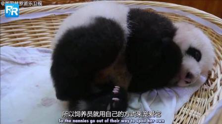 BBC纪录片: 教熊猫宝宝拉便便