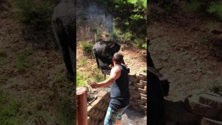 一家人兴致勃勃的在后院烧烤 谁知却引来一只馋嘴的黑熊