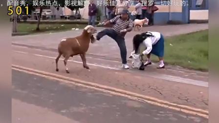 河南方言配音: 动物搞笑配音, 肚子的笑疼了 不笑你打我