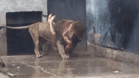 男子作死跳入狮群, 任由狮子撕咬, 结果狮子却死了!