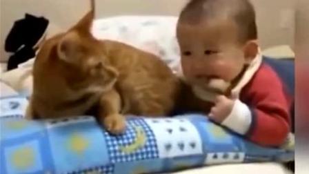 猫咪的尾巴被婴儿咬疼, 转身就是一巴掌, 满满的不舍