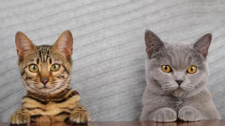 """新生代年轻猫如何成为了""""垮掉的一代""""?"""