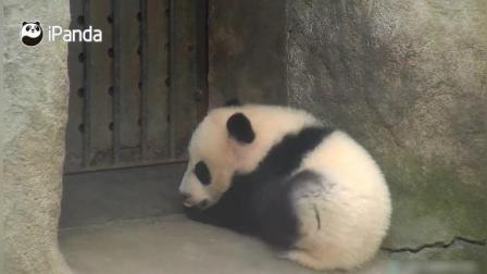 萌萌的熊猫宝宝要麻麻给他按摩