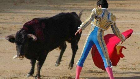 最强的斗牛士也不敢碰的斗牛, 无异于送死