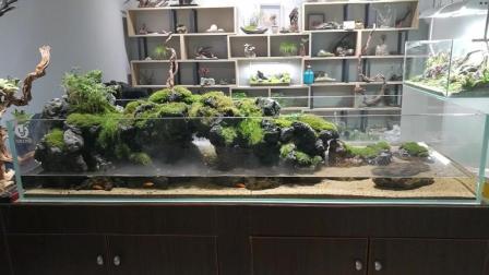 北京798实拍两米长水陆缸, 泉水涌出那一刻, 马上想搬回家做隔断