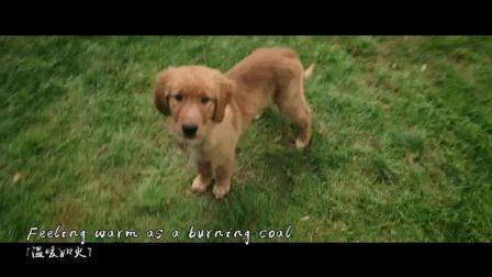 媲美忠犬八公的感人萌宠电影, 一条狗的使命是什么?