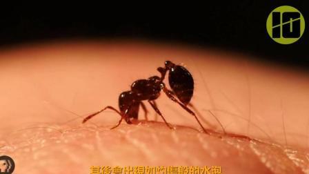 地球上最毒的虫子 第一致15000人丧命 第7每年造成66亿损失