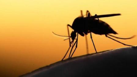 如果蚊子灭绝了, 地球会发生什么变化?