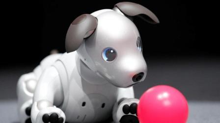 拥有高科技的机器狗, 再也不用担心孩子没有人陪伴了!