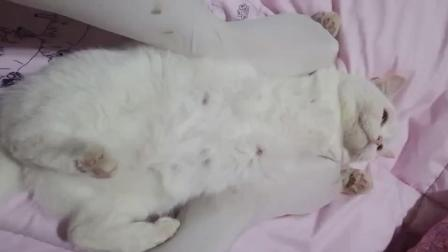 美女穿丝袜用脚为自家的宠物猫按摩, 猫的表情让人好羡慕!