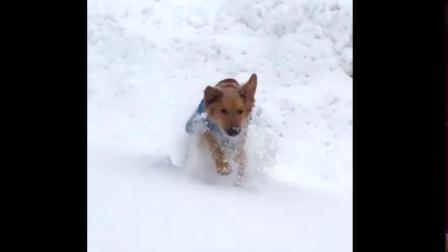 大雪中, 看狗狗玩的多开心,