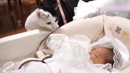 猫咪第一次看到刚出生的宝宝, 接下来喵星人的反应亮了