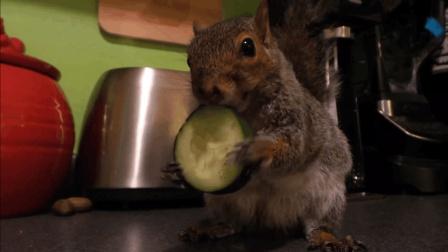 可爱松鼠吃大餐,不忘吐槽那英王菲和春晚