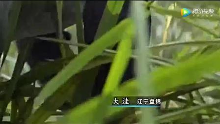舌尖上的中国: 虾子焖茭白, 蒲笋炒肉!