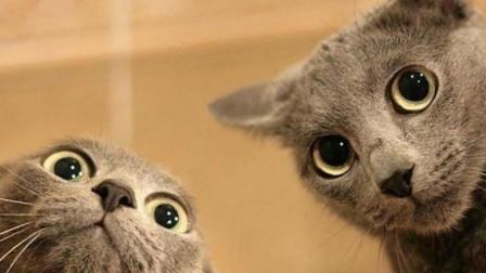 盗摄: 猫与摩托车那不得不说的羁绊