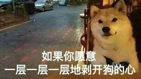 每日一囧 2018:当你想跟女友亲近一下时 总觉得有一条狗的距离 11
