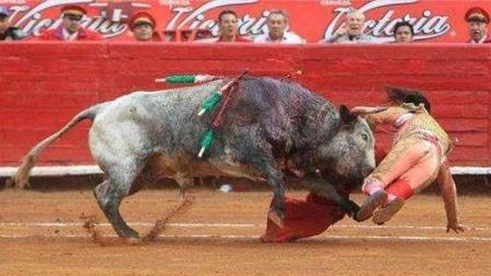 最勇敢最疯狂的女斗牛士, 不是牛死就是我亡!