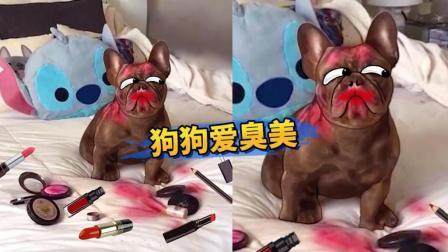 【萌星人de那些破事】气疯! 刚买的口红竟被狗子吃了!