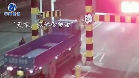 掌闻视讯 奇葩男子为通行超高货车 携带螺丝刀拆限高杆