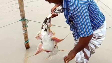 60岁大叔发明的半自动钓鱼系统, 竟捕到一条20斤的白鸽鱼, 厉害了