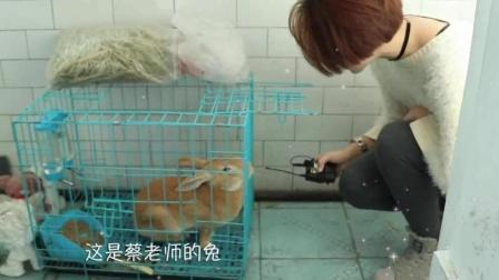 王韵老师采访兔子+《有可不可MV》【蔡海晨素描工作室】