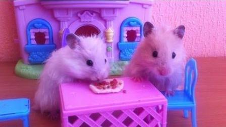 故事关于仓鼠'披萨'哥哥。卡通系列的新关系