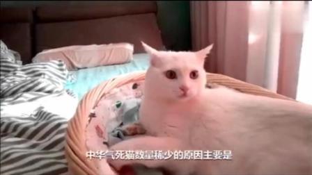 中华气死你活该猫, 专治吸猫重度患者