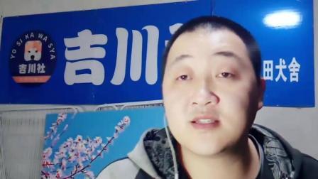 秋田犬老李说狗: 犬的繁殖搭配问题