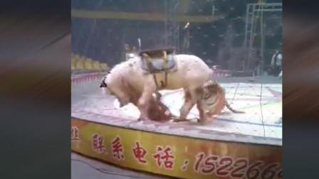 马戏团老虎狮子失控了, 这匹马倒霉了, 太惊心动魄了