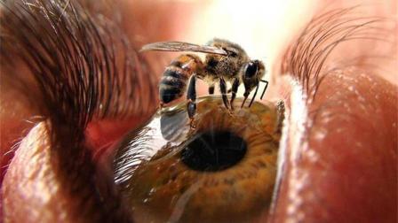 世界上蜇人最疼的昆虫, 第一名蛰一下生不如死!