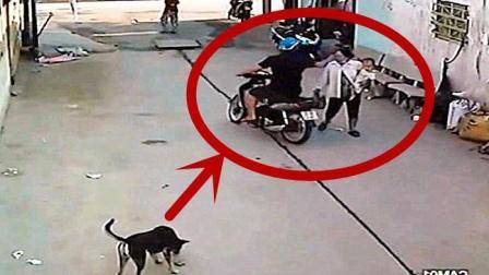 国外女子走小巷回家, 突然遇到抢劫, 狗狗的反应亮了!