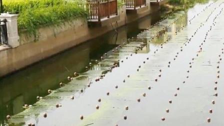 中国人发明这神奇的网, 一周就能让臭河沟变清澈, 应大力推广